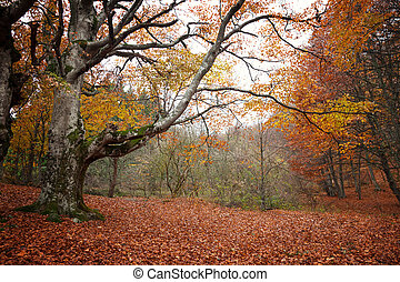 Trees with red leaves in autumn forest