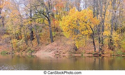 Autumn landscape, trees with yellow, red leaves swaying in the wind on the river bank, lake.