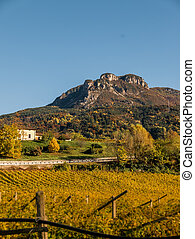 Autumn landscape vineyard, beautiful contrasting valley in Italy