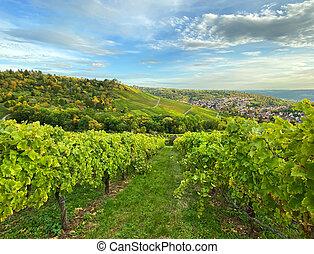 Autumn landscape vineyard countryside blue sky