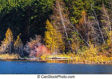 Autumn landscape. Western Siberia