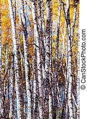 Autumn landscape. Western Siberia - Autumn landscape. Trunks...