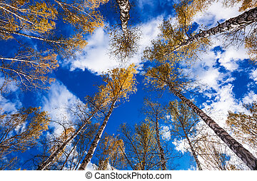 Autumn landscape. Western Siberia, Novosibirsk region, ...