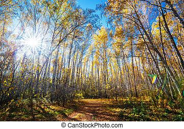 Autumn landscape. Western Siberia - The road strewn with ...