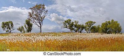 Autumn landscape with a cane