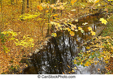 Autumn Landscape with a Creek. View from Above.