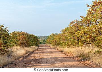 Autumn landscape with a gravel road