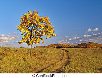 Autumn landscape with a lonely tree