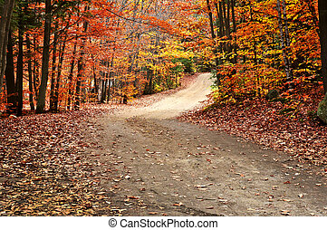 Autumn landscape with a path - Trail through group of ...