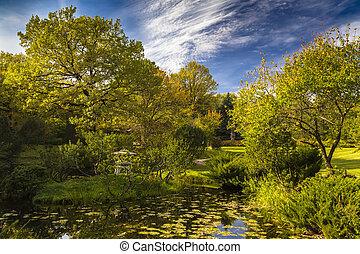 autumn landscape with a pond
