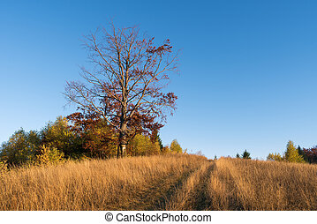Autumn landscape with a road in the dry grass