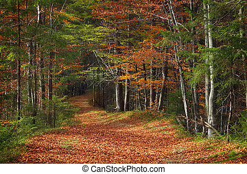 Autumn landscape with a road in the forest