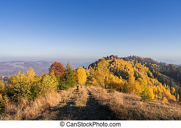 Autumn landscape with a road in the mountains