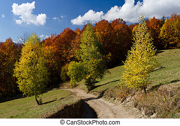 Autumn landscape with a road