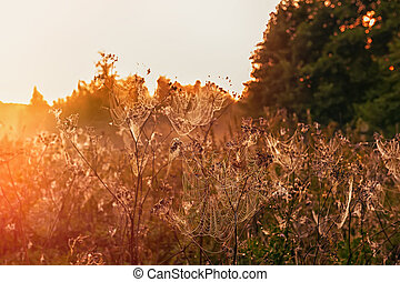 Autumn landscape with a spider web on meadow grass covered with drops of dew at sunset, in the sunlight. Selective focus. The horizontal frame.