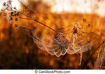 Autumn landscape with a spider web on meadow grass covered with drops of dew at sunset, in the sunlight. Selective focus.