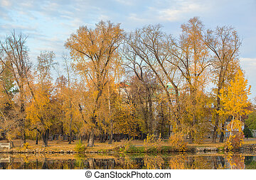 andscape with beautiful trees in yellow leaves by the river.
