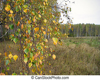 Autumn landscape with branches of yellow birch tree