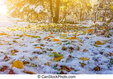 Autumn landscape with bright maple leaves on the snow in the Park on a Sunny November morning