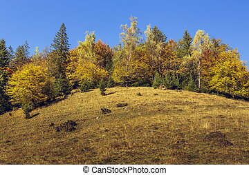 Autumn landscape with colorful forest edge uphill and clear...