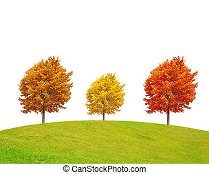 Autumn landscape with colorful tree