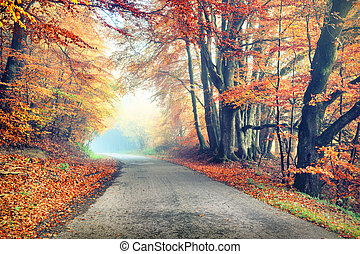 Autumn landscape with country road in orange tone