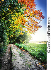 Autumn landscape with country road