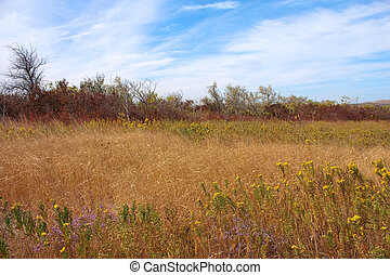 Autumn. Landscape with flowers and dry grass with blue sky in Crimea, Ukraine