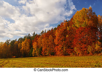 autumn landscape with forest and blue sky - trees with red and yellow leaves near field