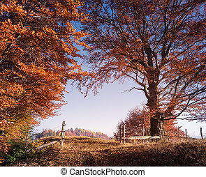 Autumn landscape with forest road and gate
