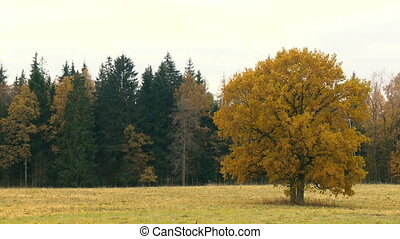 Autumn landscape with orange autumn oak tree in the field.