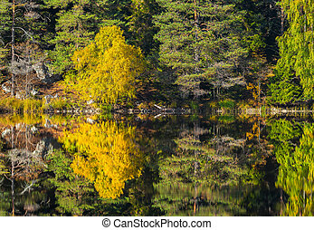 Autumn landscape with reflective calm lake