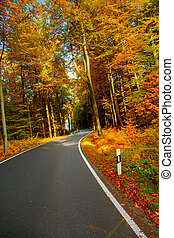 Autumn landscape with road and beautiful trees. Saxon Switzerland, Germany. Toned image