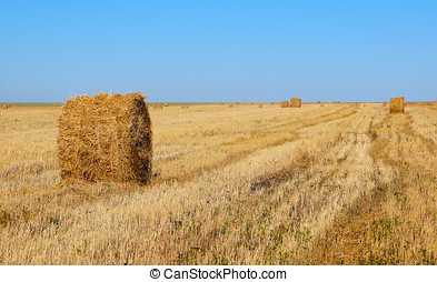 Autumn landscape with rolls of hay in the field