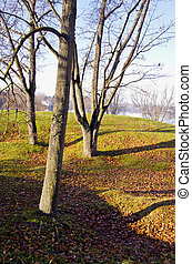 autumn landscape with tree shadows