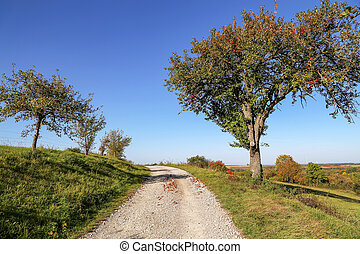 Autumn landscape with trees and a road