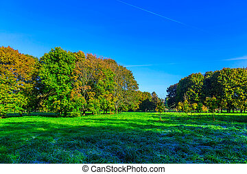 Autumn Landscape with Trees on Meadow