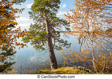 Autumn landscape with trees on the lake