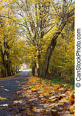 autumn landscape with yellow leaves on the trees, the road is strewn with autumn leaves
