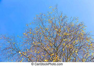 Autumn Landscape with Yellow Leaves on Tree Branches