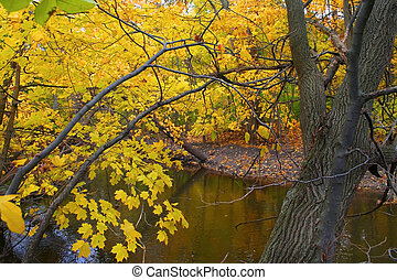 Autumn Landscape - Yellow colored tree by the stream in...