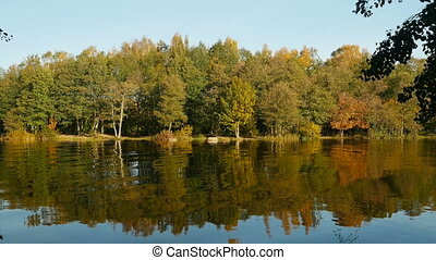 autumn landscape, yellow trees reflected in water