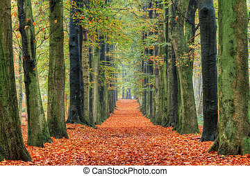 Autumn lane orange leafs