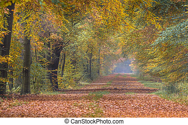Autumn lane with yellow Beech trees
