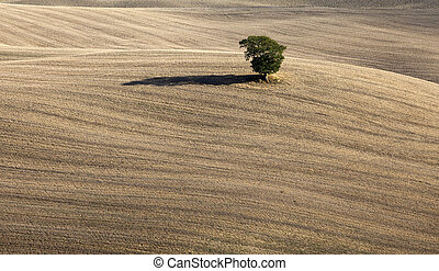 Autumn lanscape - Lonely tree in the plowed field -...