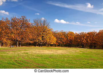 Autumn lanscape with oak grove and green meadow