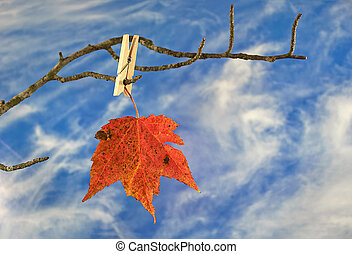 autumn leaf and clothespin on branch