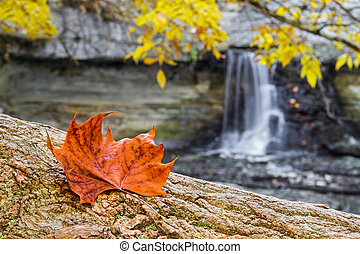 Autumn Leaf and Waterfall
