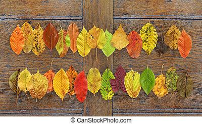 Autumn leaf background close up