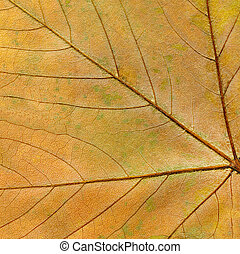 Autumn leaf background close up. Grunge background with autumn leaves